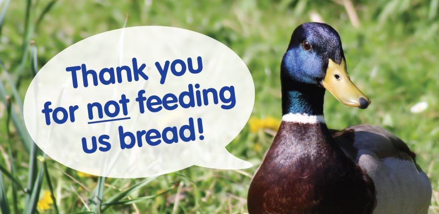 Duck, Thank you for NOT feeding us